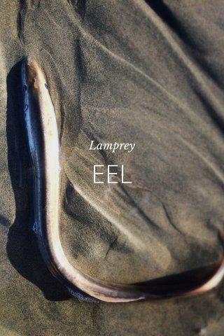 EEL Lamprey