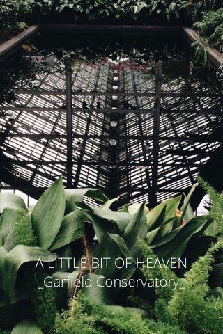 A LITTLE BIT OF HEAVEN _Garfield Conservatory_