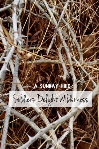 Soldiers Delight Wilderness A Sunday Hike