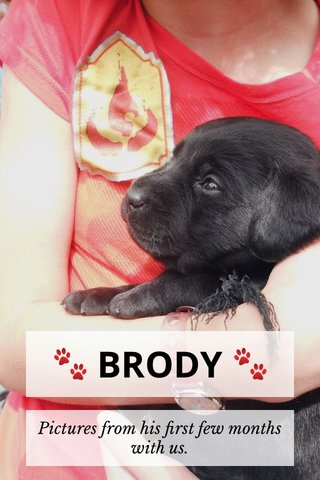 🐾 BRODY 🐾 Pictures from his first few months with us.