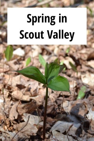 Spring in Scout Valley