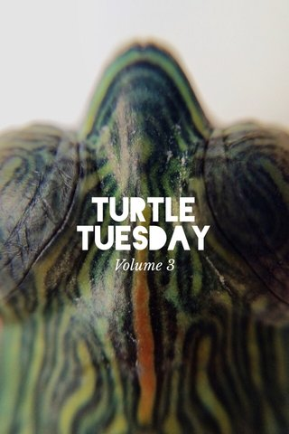 Turtle tuesday Volume 3