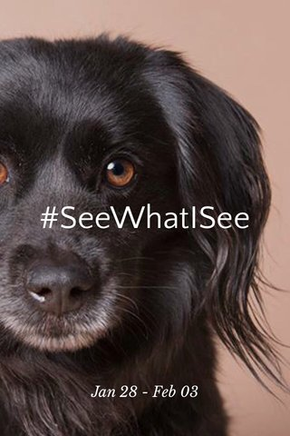 #SeeWhatISee Jan 28 - Feb 03