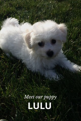 LULU Meet our puppy