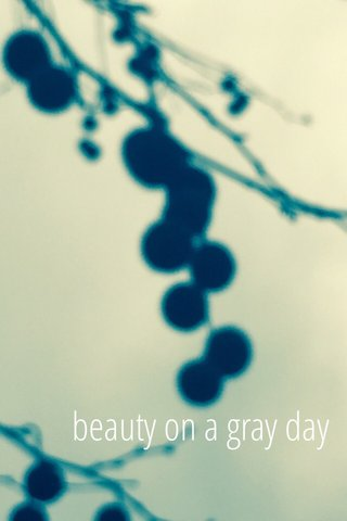 beauty on a gray day
