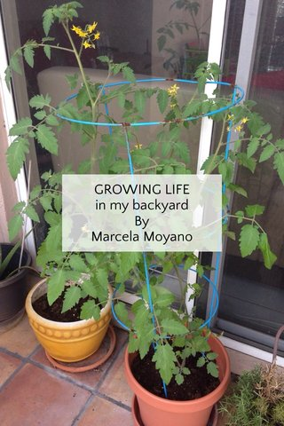 GROWING LIFE in my backyard By Marcela Moyano