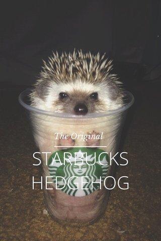 STARBUCKS HEDGEHOG The Original