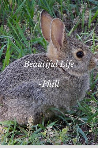 Beautiful Life -Phill