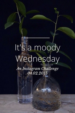 It's a moody Wednesday An Instagram Challenge 04.02.2015