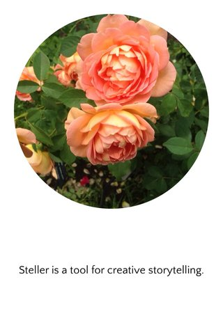 Steller is a tool for creative storytelling.