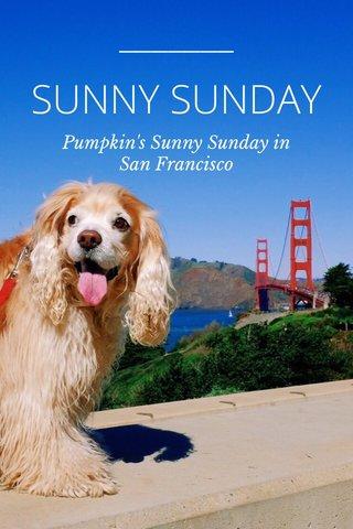 SUNNY SUNDAY Pumpkin's Sunny Sunday in San Francisco