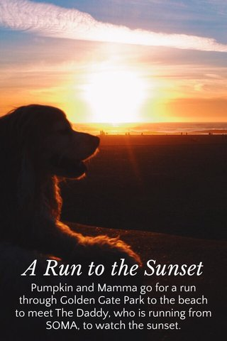 A Run to the Sunset