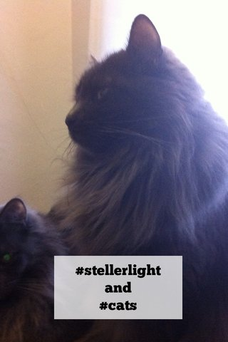 #stellerlight and #cats