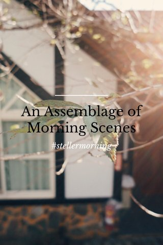 An Assemblage of Morning Scenes #stellermorning
