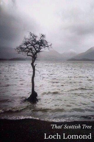 Loch Lomond 'That' Scottish Tree