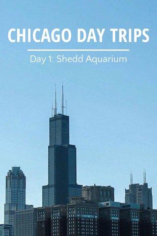 CHICAGO DAY TRIPS Day 1: Shedd Aquarium