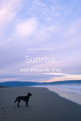 Sunrise with Willow the Wild