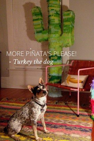 MORE PIÑATA'S PLEASE! . - Turkey the dog
