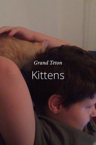 Kittens Grand Teton