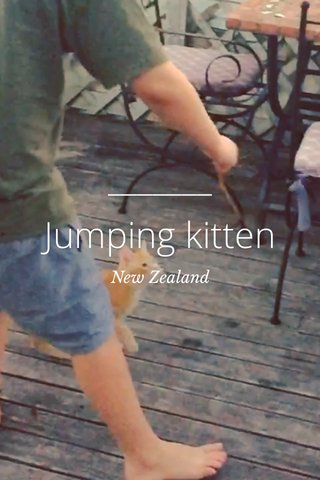 Jumping kitten New Zealand