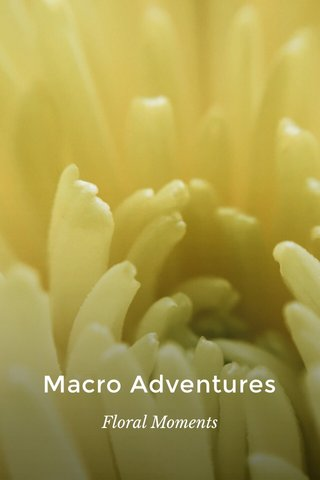 Macro Adventures Floral Moments