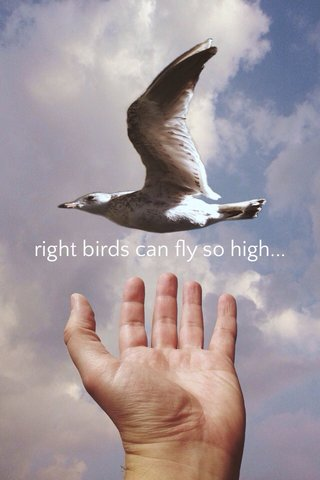right birds can fly so high...
