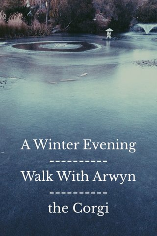 A Winter Evening ---------- Walk With Arwyn ---------- the Corgi