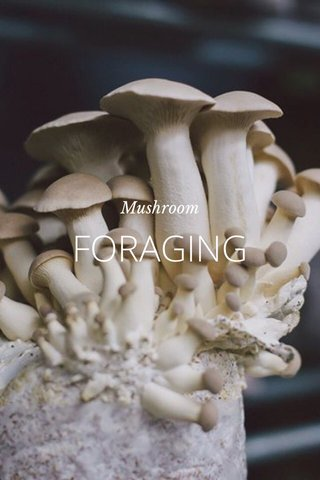 FORAGING Mushroom