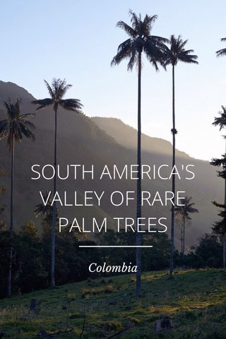 SOUTH AMERICA'S VALLEY OF RARE PALM TREES Colombia