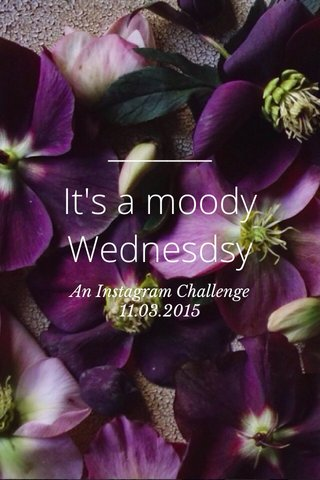 It's a moody Wednesdsy An Instagram Challenge 11.03.2015
