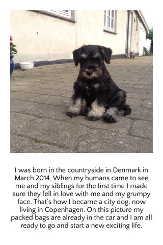 I was born in the countryside in Denmark in March 2014. When my humans came to see me and my siblings for the first time I made sure they fell in love with me and my grumpy face. That's how I became a city dog, now living in Copenhagen. On this picture my packed bags are already in the car and I am all ready to go and start a new exciting life.