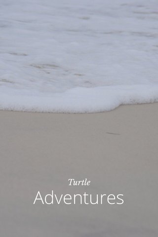 Adventures Turtle