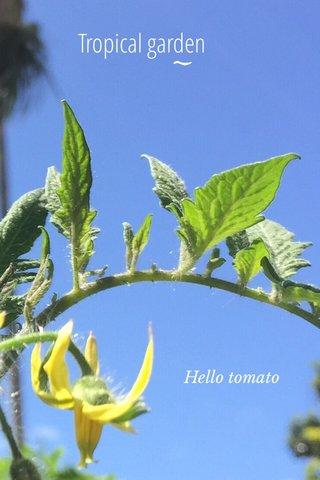 Tropical garden Hello tomato