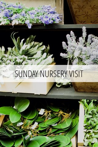 SUNDAY NURSERY VISIT