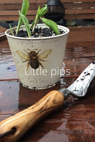 Little pips