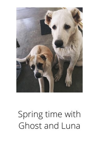 Spring time with Ghost and Luna