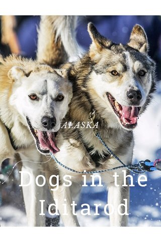 Dogs in the Iditarod ALASKA