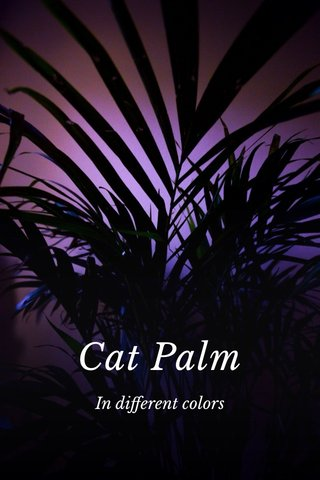 Cat Palm In different colors