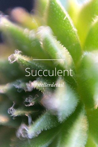 Succulent #stellerdetail