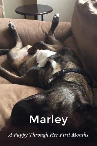 Marley A Puppy Through Her First Months