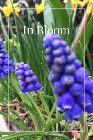 In Bloom