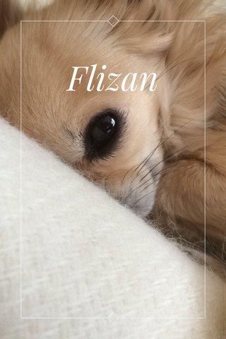 Flizan