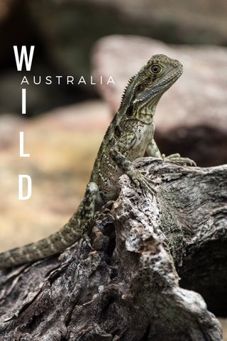 W I L D AUSTRALIA