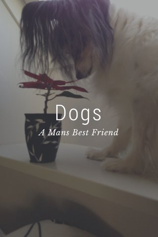 Dogs A Mans Best Friend