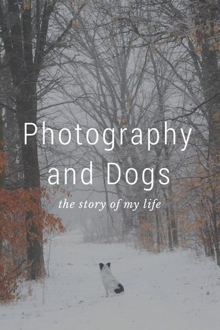 Photography and Dogs the story of my life