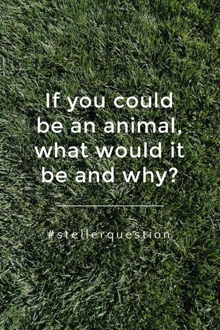 If you could be an animal, what would it be and why? #stellerquestion