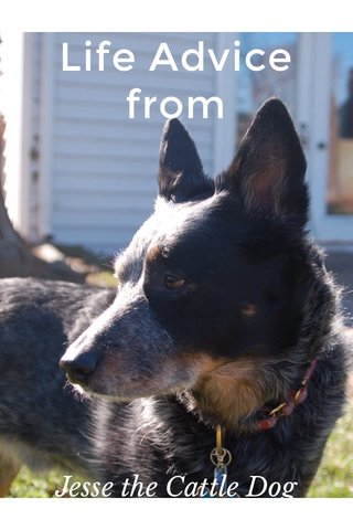 Life Advice from Jesse the Cattle Dog
