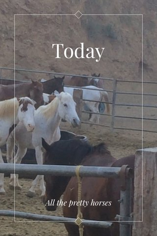 Today All the pretty horses