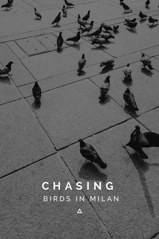 CHASING BIRDS IN MILAN