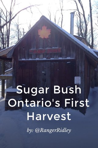Sugar Bush Ontario's First Harvest by: @RangerRidley